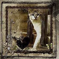 Alley_Cat.jpg