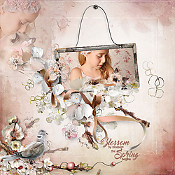 Blossom-by-Blossom.jpg