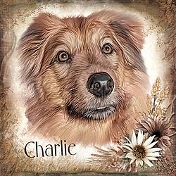 Charlie_2.jpg