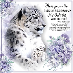 Have_you_seen_the_snow_leopard.jpg