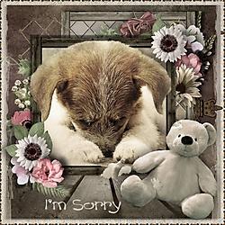 I_m_Sorry.jpg