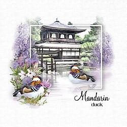 Mandarin_Duck2.jpg