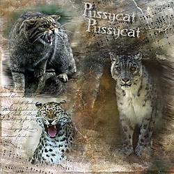 Pussycat_Pussycat.jpg