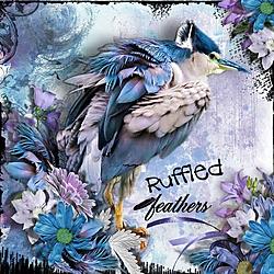 Ruffled_Feathers.jpg