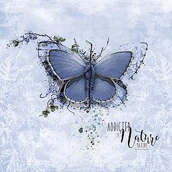 The-beautiful-butterfly.jpg