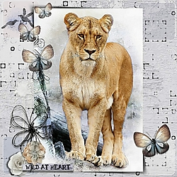 Wild_at_Heart_.jpg
