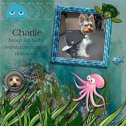charlie_the_turtle.jpg
