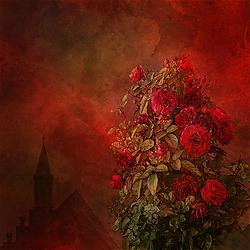 roses_-_born_of_dreams.jpg