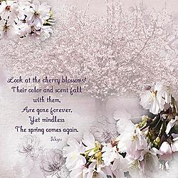 2017_04_limitedColor_blossom.jpg