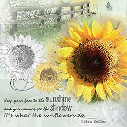 2017_05_repetition_sunflower.jpg