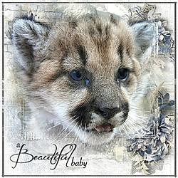 A_Beautiful_Baby.jpg
