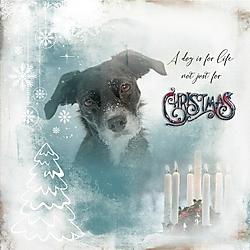 A_dogs_Life.jpg