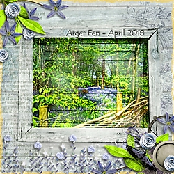 Arger_Fen_Bluebells.jpg