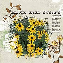 Black-Eyed-Susans-RDD-Template-Challenge-copy.jpg