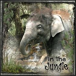 In_the_Jungle.jpg