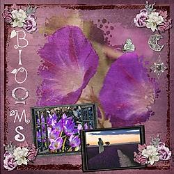 JA_Blooms.jpg