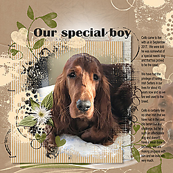 OurSpecialBoy.jpg