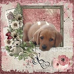 Puppy_Love1.jpg