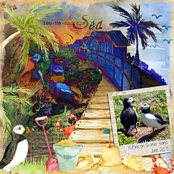 Sea_Parrots.jpg