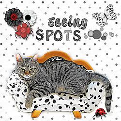 SeeingSpots-JunkBoxJan-Web.jpg