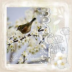 Springtime4.jpg