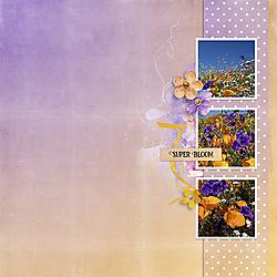 Super-Bloom.jpg