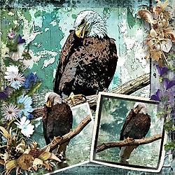 The_Eagle.jpg