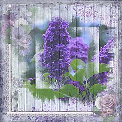 Violette-Challenge.jpg