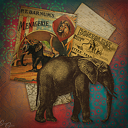 Elephants-SC-2018.jpg