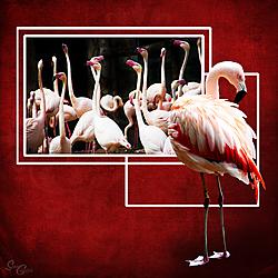 Flamingo-SC-2018.jpg