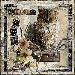 16_Curly_Cat.jpg