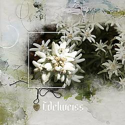2018_31_edelweiss.jpg