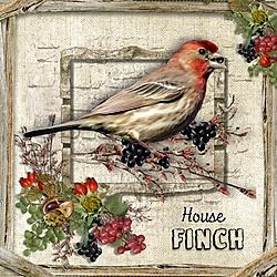 F_is_for_Finch.jpg