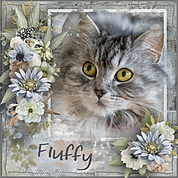 F_is_for_Fluffy.jpg