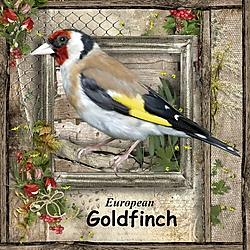G_is_for_Goldfinch.jpg