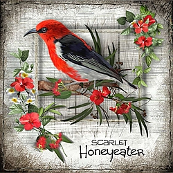 H_is_for_Honeyeater.jpg