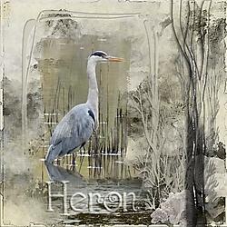 Heron_lake.jpg