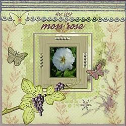 JA_M_is_for_Moss_Rose.jpg