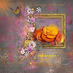 JA_Week_2_B_Begonia_Rosey-Posey_42_Glee.jpg