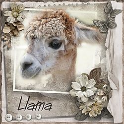 L_is_for_Llama.jpg