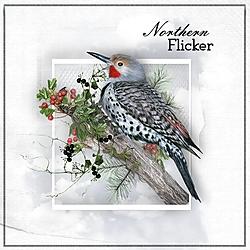N_is_for_Northern_Flicker.jpg