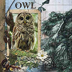 OWL_.jpg