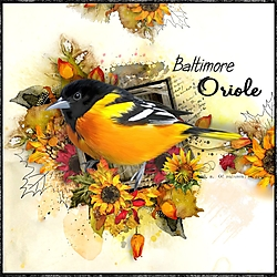 O_is_for_Oriole2.jpg