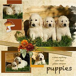 P52-18-2-Puppies-Web.jpg