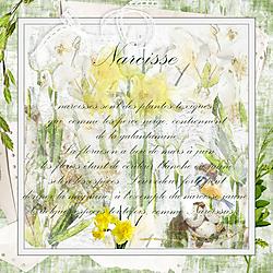 Projet_52_Week_14N_DitaB_Designs_Narcisse.jpg
