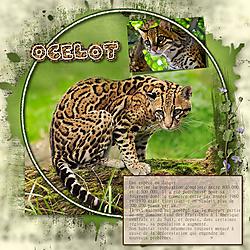 Projet_52_Week_15_O_Ocelot.jpg