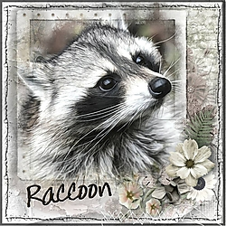 R_is_for_Raccoon.jpg