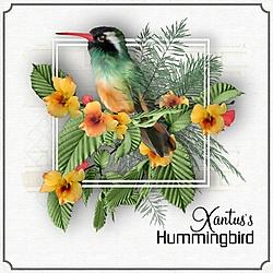 X_is_for_Xantus_s_Hummingbird.jpg