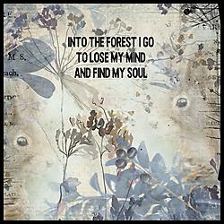 dita_forest_1_resized.jpg